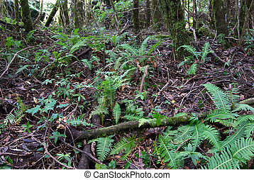 ferns and plants under the canopy of the oxley world heritage rainforest