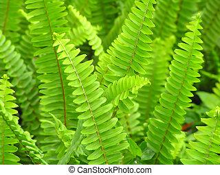 ferns background