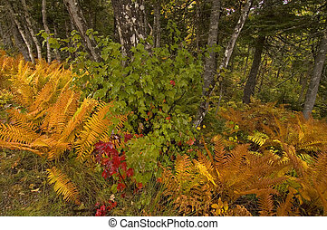 Ferns, Cape Breton Highlands National Park, Nova Scotia, Canada