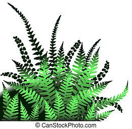 Illustrated design element of fern leaves