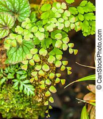 Ferns in garden  Thailand.