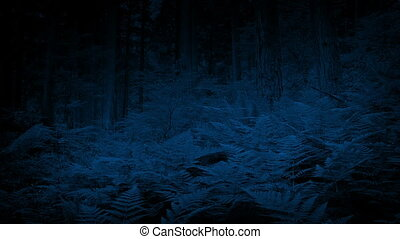 Ferns In The Woods At Night - Bank of ferns sway in gentle...