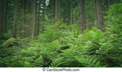 Ferns In Verdant Forest - Dense ferns and trees in woodland