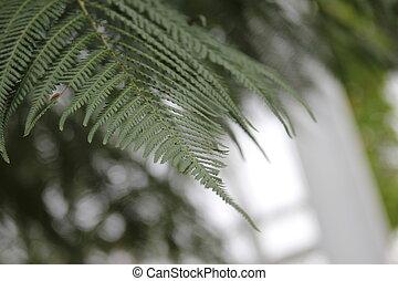 Ferns Natural Green Environment