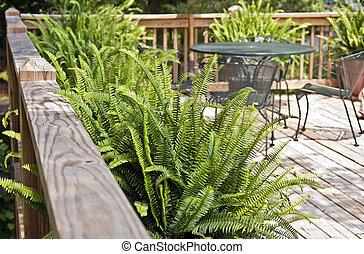 Ferns on a Deck