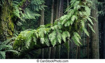 Ferns On Old Trunk In Breeze - Tree trunk covered in moss...