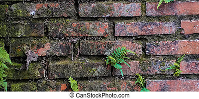 ferns (Pteridium aquilinum) on damp and old brick wall