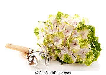 ferramentas, branca, jardinagem, hydrangea