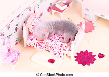Ferret baby in doll house