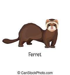 Ferret domesticated form of European polecat vector - Ferret...