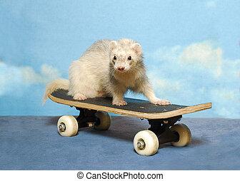 Ferret on a Skate Board