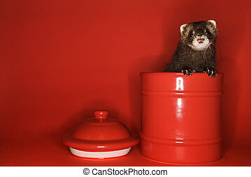 Ferret peeking out of jar. - Brown ferret peeking out of red...