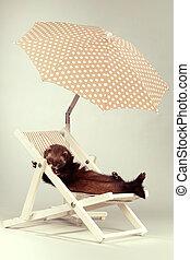 Ferret portrait in lazy beach style