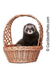 Ferret sitting in basket