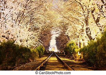 ferrovia, notte, piste, vista