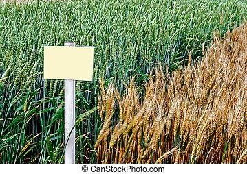 Fertile wheat and barley 2