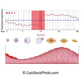fertilidad, gráfico, eps10