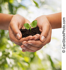woman hands holding plant in soil - fertility, environment, ...