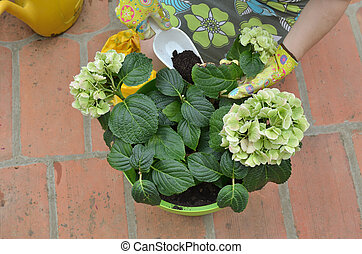 Fertilizing flowers in summer - Woman adding fertilizing...