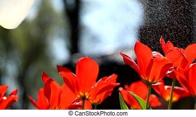 Fertilizing flowers video