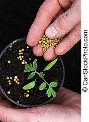 Fertilizing  plant seedling