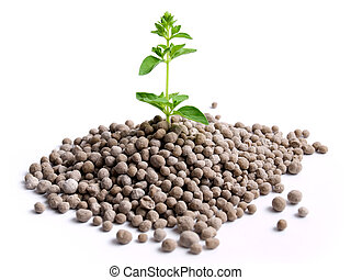Young plant is growing from the pile of nitrogen fertilizer in granules.