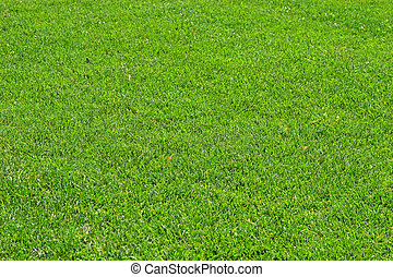 Fescue Grass - A closeup of green grass fading into the...