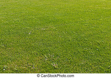 Photo of a fresh cut green grass