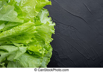 Fesh green lettuce salad organic leaves, on black background with copy space for text