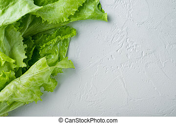 Fesh green lettuce salad organic leaves, on white background with copy space for text