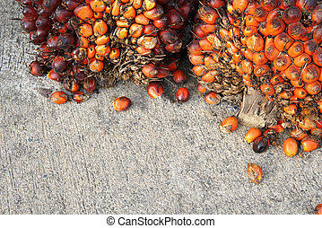 fesh palm oil seed on floor