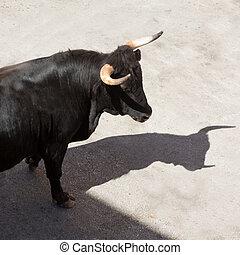 fest, calle, corriente, españa, toros