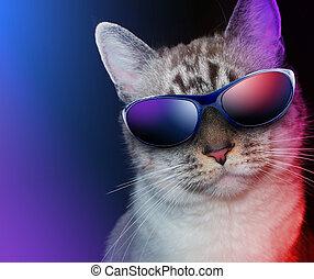festa, fresco, occhiali da sole, gatto