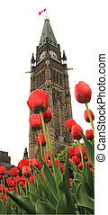 festival, tulipe, ottawa