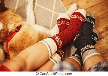 festivo, meias, ligado, par, pernas, e, cute, dourado, cão,...
