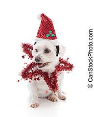 festivo, perro
