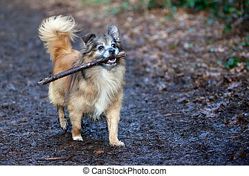 Fetching - A happy cute dog playing with a stick