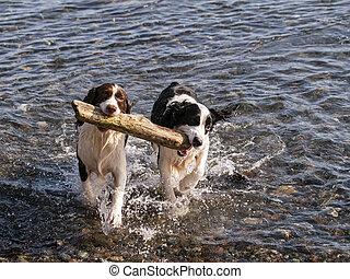 Fetching Stick