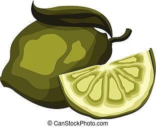 fetta, illustrazione, fondo., frutta, vettore, verde bianco, calce