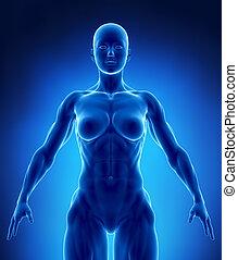 fettleibigkeit, begriff, in, röntgenaufnahme