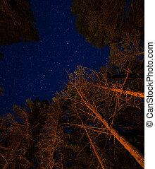feu camp, étoiles, arbres, au-dessus
