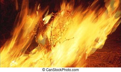 feu forêt, cu