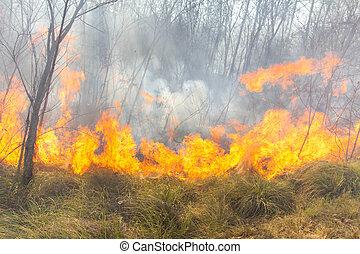 feu forêt, exotique