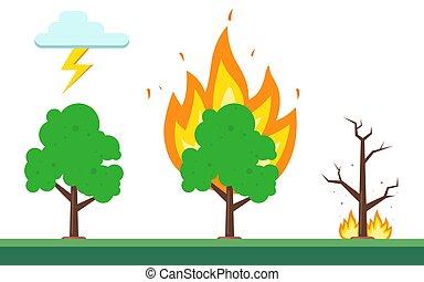 feuer, forest., natur, natürlich, reihenfolge