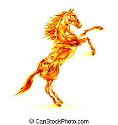 feuer, pferd, aufbäumen, auf.