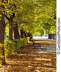 feuillage coloré, dans, les, automne, parc
