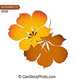 feuille, écrou, isolé, illustration, automne, arrière-plan., vecteur, blanc