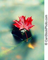 feuille érable, feuilles, jaune, automne, séché, orange, rouges, eau