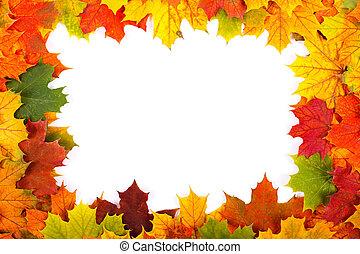 feuille, érable, frontière, automne