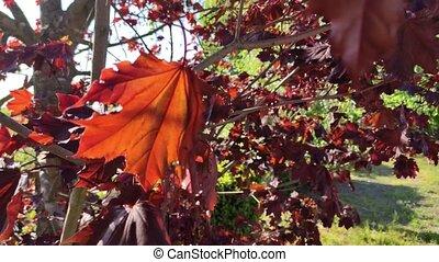 feuille, 2, automne, arbre